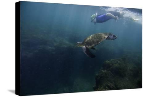 A Snorkeler Swimming with a Green Sea Turtle-Jad Davenport-Stretched Canvas Print