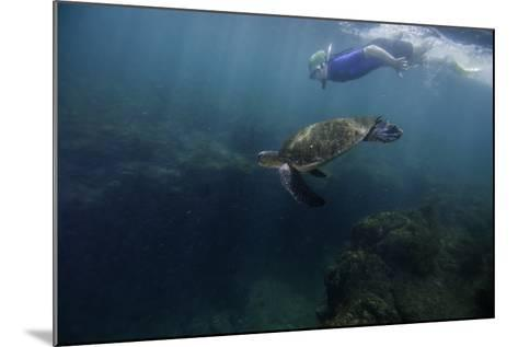 A Snorkeler Swimming with a Green Sea Turtle-Jad Davenport-Mounted Photographic Print