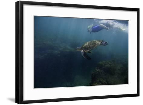 A Snorkeler Swimming with a Green Sea Turtle-Jad Davenport-Framed Art Print