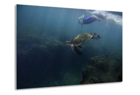 A Snorkeler Swimming with a Green Sea Turtle-Jad Davenport-Metal Print