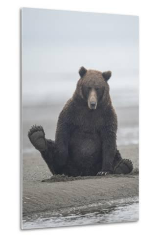 Brown Bear Sitting on Sand at Silver Salmon Creek Lodge in Lake Clark National Park-Charles Smith-Metal Print