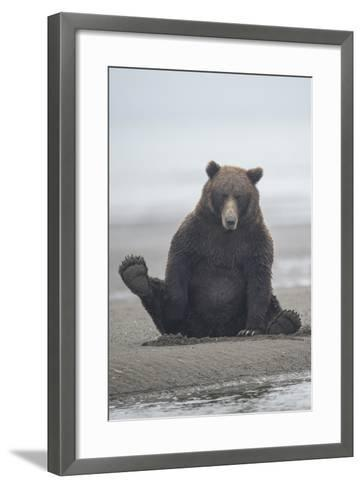 Brown Bear Sitting on Sand at Silver Salmon Creek Lodge in Lake Clark National Park-Charles Smith-Framed Art Print