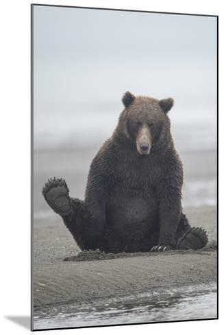 Brown Bear Sitting on Sand at Silver Salmon Creek Lodge in Lake Clark National Park-Charles Smith-Mounted Photographic Print