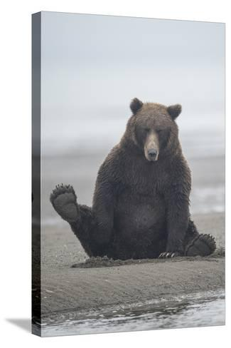 Brown Bear Sitting on Sand at Silver Salmon Creek Lodge in Lake Clark National Park-Charles Smith-Stretched Canvas Print