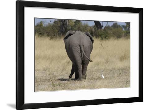 A White Bird Next to an Elephant, Upper Vumbura Plains, Botswana-Anne Keiser-Framed Art Print