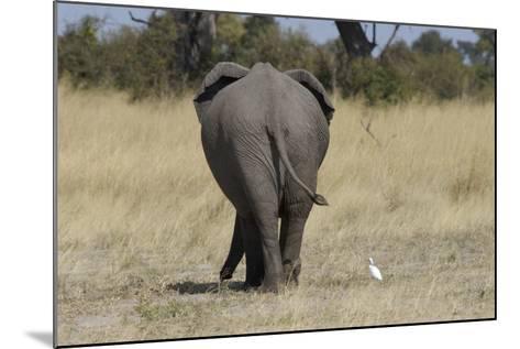 A White Bird Next to an Elephant, Upper Vumbura Plains, Botswana-Anne Keiser-Mounted Photographic Print