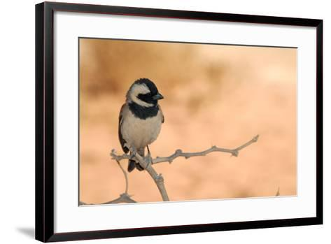 Sparrow in Area of Sossusvlei Dunes, Namibia-Anne Keiser-Framed Art Print