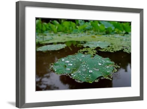 Water Drops on a Water Lily, Nymphaeaceae, Floating on Water-Tyrone Turner-Framed Art Print