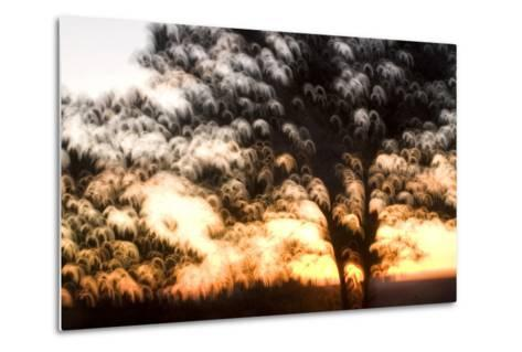 Trees in Early Morning at Grand Canyon National Park-Philip Schermeister-Metal Print