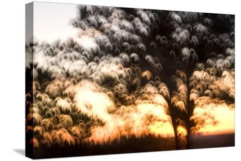 Trees in Early Morning at Grand Canyon National Park-Philip Schermeister-Stretched Canvas Print