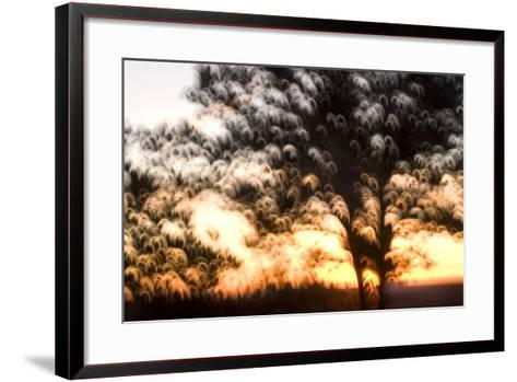 Trees in Early Morning at Grand Canyon National Park-Philip Schermeister-Framed Art Print