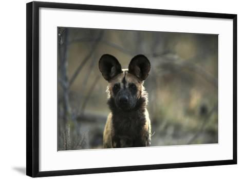A Portrait of an African Wild Dog, Lycaon Pictus-Beverly Joubert-Framed Art Print