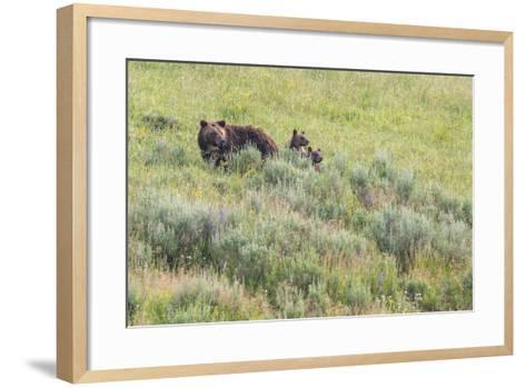 Brown Bear, Ursus Arctos, with its Two Cubs-Tom Murphy-Framed Art Print