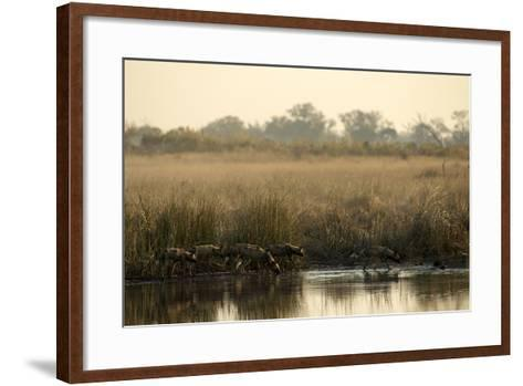 A Pack of African Wild Dog, Lycaon Pictus, Drink from a Spillway at Sunset-Beverly Joubert-Framed Art Print