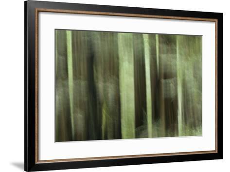 Coast Redwood Trees, Sequoia Sempervirens, in Redwood National Park-Philip Schermeister-Framed Art Print