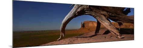 A Dead Mesquite Trees and Buttes-Raul Touzon-Mounted Photographic Print