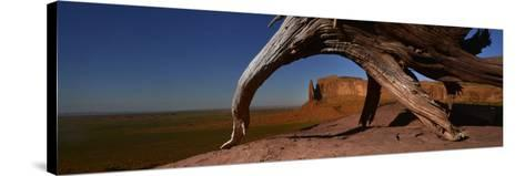 A Dead Mesquite Trees and Buttes-Raul Touzon-Stretched Canvas Print