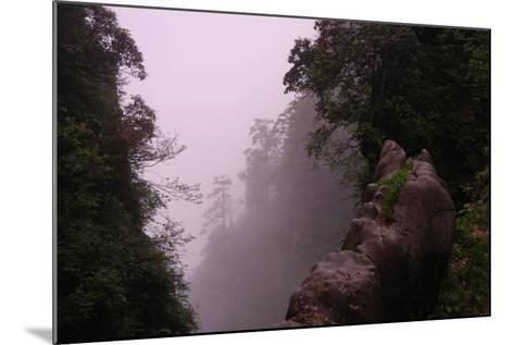 Misty Green Forest of Emei Shan-Tyrone Turner-Mounted Photographic Print