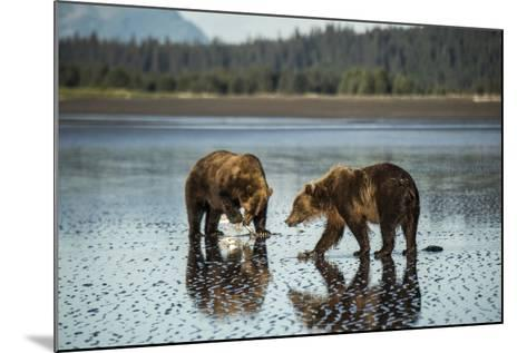 Brown Bear Walking at Silver Salmon Creek Lodge in Lake Clark National Park-Charles Smith-Mounted Photographic Print