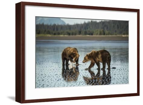 Brown Bear Walking at Silver Salmon Creek Lodge in Lake Clark National Park-Charles Smith-Framed Art Print