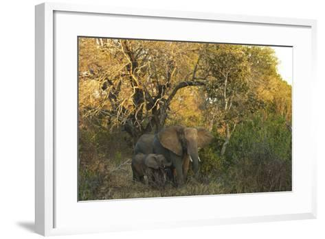 An African Elephant and Calf in South Africa's Timbavati Game Reserve-Steve Winter-Framed Art Print