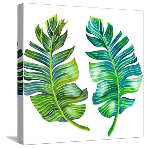 Single Isolated Banana Leaf-rosapompelmo-Stretched Canvas Print