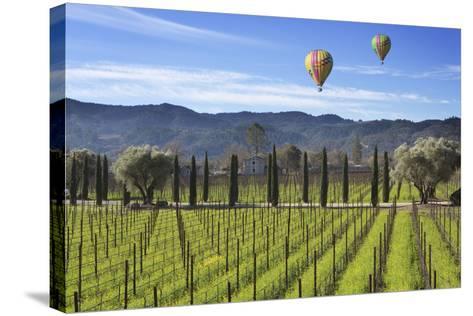 Napa Valley 1-Robert Hansen-Stretched Canvas Print