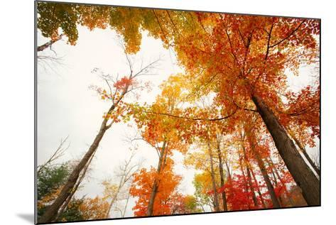 Autumn Tree Tops, Lincoln New Hampshire, Kancamagus-Vincent James-Mounted Photographic Print