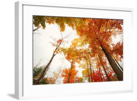 Autumn Tree Tops, Lincoln New Hampshire, Kancamagus-Vincent James-Framed Art Print