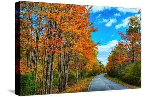 Autumn Road, Acadia National Park, Maine-Vincent James-Stretched Canvas Print