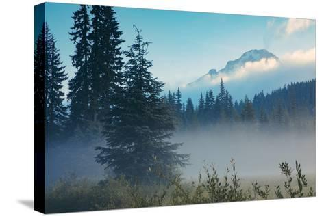Misty Mount Hood Meadow in Spring, Oregon Wilderness-Vincent James-Stretched Canvas Print