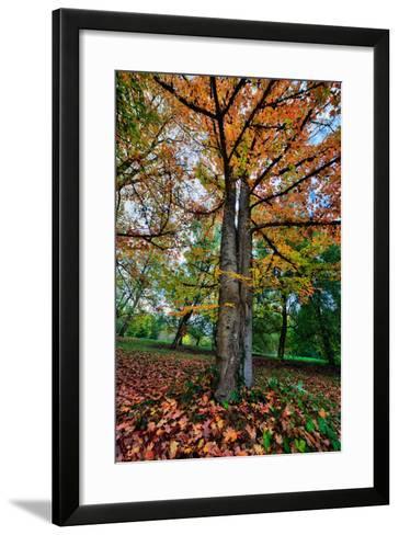 Autumn Tree Splendor, Hoyt Aboretum Portland Oregon-Vincent James-Framed Art Print