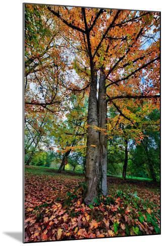 Autumn Tree Splendor, Hoyt Aboretum Portland Oregon-Vincent James-Mounted Photographic Print