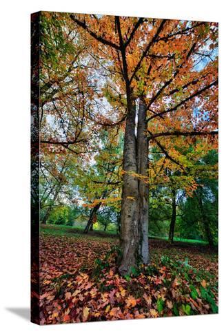 Autumn Tree Splendor, Hoyt Aboretum Portland Oregon-Vincent James-Stretched Canvas Print