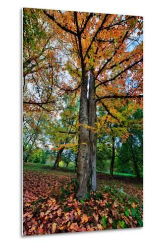 Autumn Tree Splendor, Hoyt Aboretum Portland Oregon-Vincent James-Metal Print
