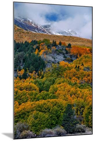 Fall Color and Stormy Skies in the Eastern Sierras, June Lake-Vincent James-Mounted Photographic Print