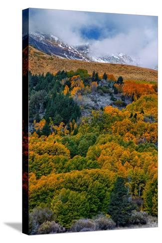 Fall Color and Stormy Skies in the Eastern Sierras, June Lake-Vincent James-Stretched Canvas Print