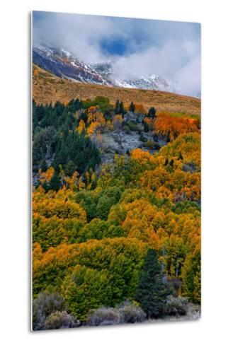 Fall Color and Stormy Skies in the Eastern Sierras, June Lake-Vincent James-Metal Print