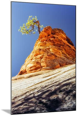 Rock Tree, Checkerboard Mesa, Zion National Park Utah-Vincent James-Mounted Photographic Print