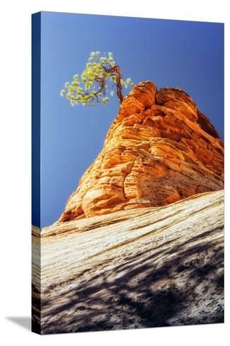 Rock Tree, Checkerboard Mesa, Zion National Park Utah-Vincent James-Stretched Canvas Print