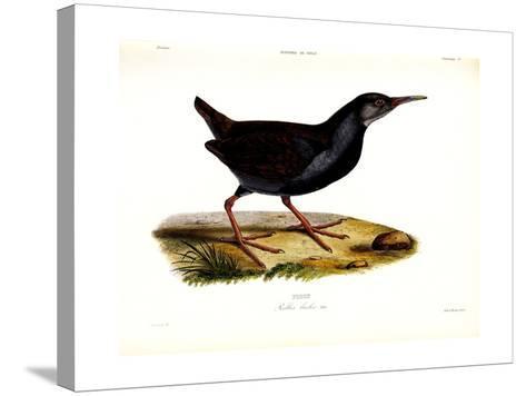 Piden, Atlas de La Historia Física y Política de Chile, 1854-Claudio Gay-Stretched Canvas Print