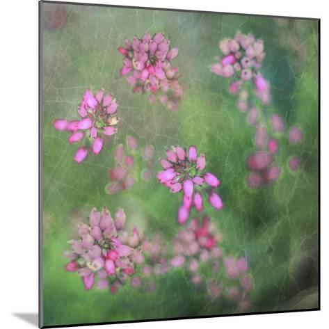 Wildflowers-Viviane Fedieu Daniel-Mounted Photographic Print