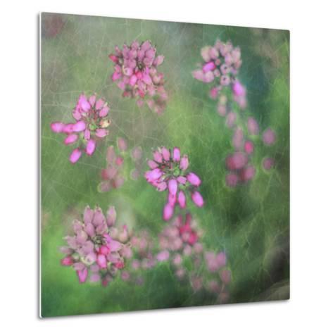 Wildflowers-Viviane Fedieu Daniel-Metal Print