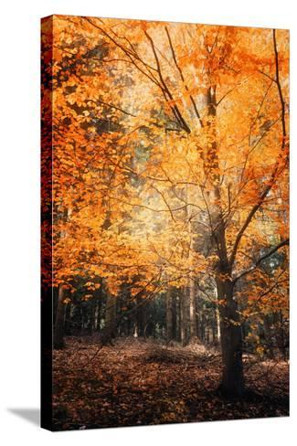 Circle of Life-Philippe Sainte-Laudy-Stretched Canvas Print