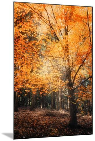 Circle of Life-Philippe Sainte-Laudy-Mounted Photographic Print
