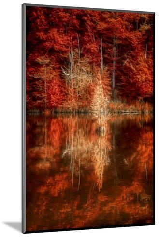 My Favorite Things-Philippe Sainte-Laudy-Mounted Photographic Print