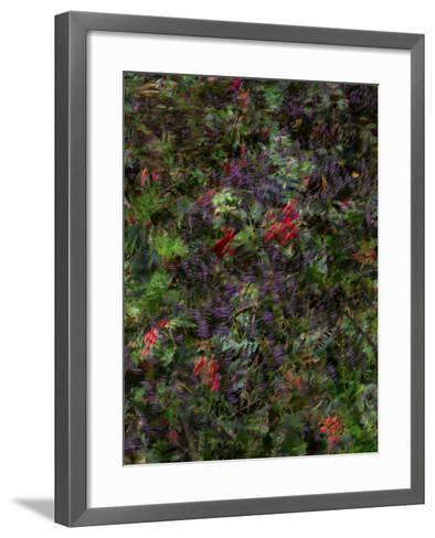 Autumn Fruits-Doug Chinnery-Framed Art Print
