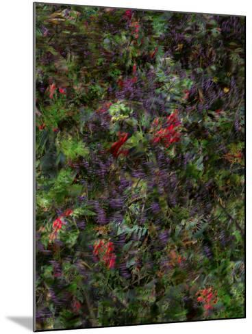 Autumn Fruits-Doug Chinnery-Mounted Photographic Print