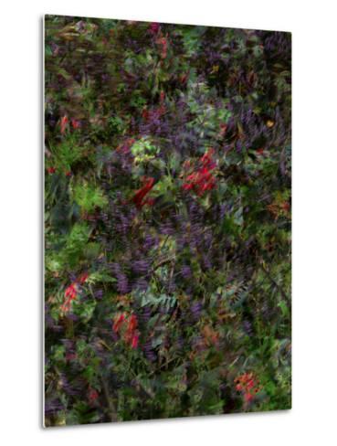 Autumn Fruits-Doug Chinnery-Metal Print