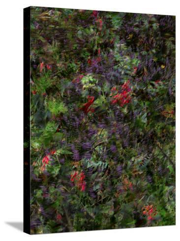 Autumn Fruits-Doug Chinnery-Stretched Canvas Print
